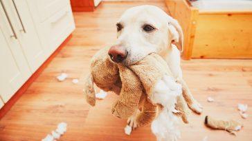 Pas igračka