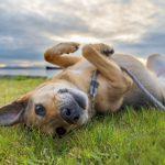 trošak uzdržavanja psa