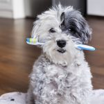 pranje zubi kod pasa