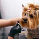 salon sisanje psa