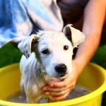 kupanje psa