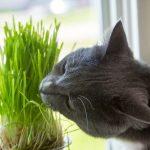 opasne biljke za kućne ljubimce