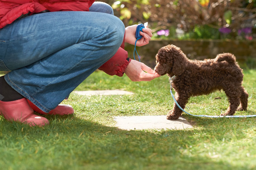 kako dresirati psa