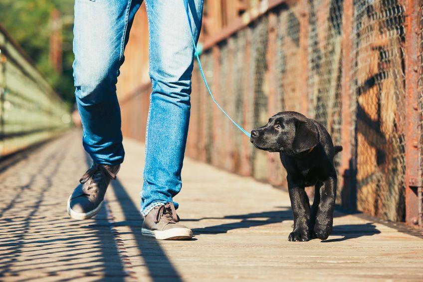 kako najlakše nabaviti psa