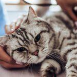 cijepljenje pasa i mačaka