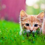 puštanje mačke van