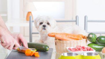 voće i povrće pas