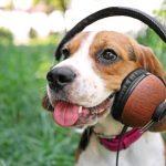 životinje glazba