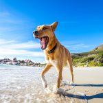odlazak na plažu s psom