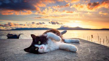 mačke boje vode
