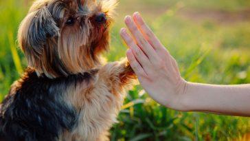 kako njegovati pseće šape ljeti
