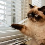 mačka ne želi ići van