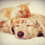 zašto mačke vole spavati na glavi
