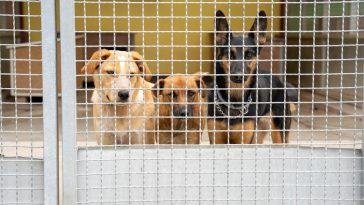 udomljavanje pasa