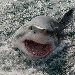 morski psi