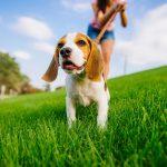 pas hod na lajni
