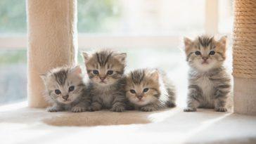 kako životinje utječu na naše raspoloženje