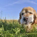 pas jede travu