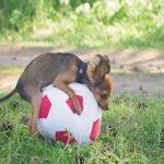 naskakivanje kod pasa