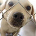 mitovi o udomljavanju pasa