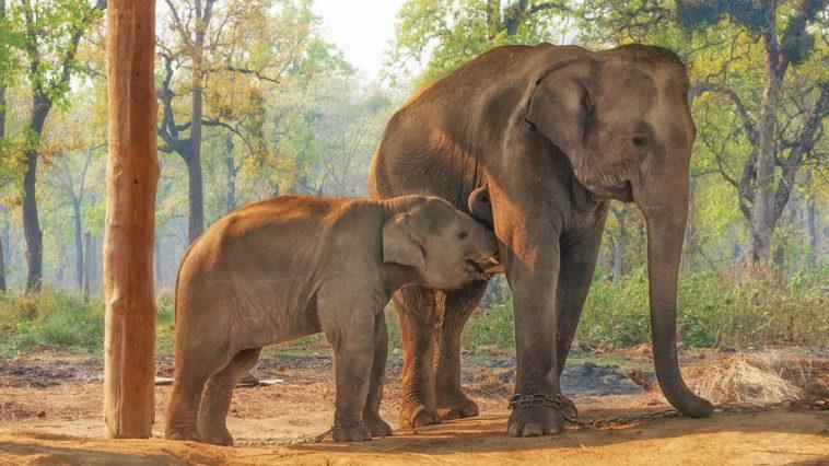 najbolje životinjske mame
