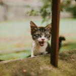 mačka stalno mjauče