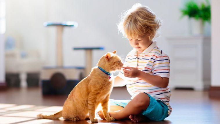 mačke i djeca