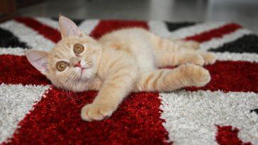 najpopularnija imena za mačke