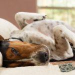 Koliko dugo pas može biti sam doma