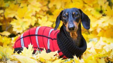 kaputići za pse
