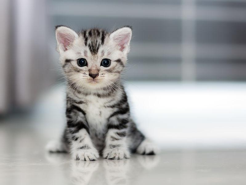 mačke za početnike