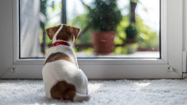 zašto kućni ljubimci ne vole kišu