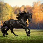 najljepše vrste konja na svijetu
