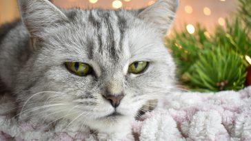 nagradni natječaj za tvoju mačku