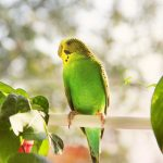 stres kod ptica