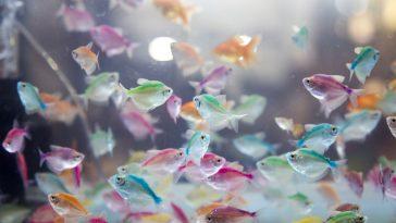 Koliko dugo žive ribe