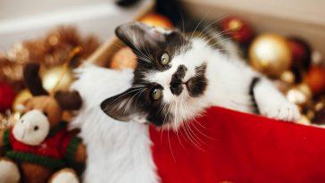 Mačke s neobičnim uzorcima na krznu