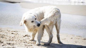zašto pas ima rep
