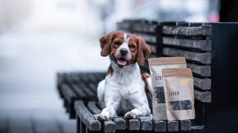 kako odabrati hranu za psa