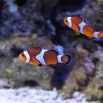 Kako hraniti ribice u akvariju