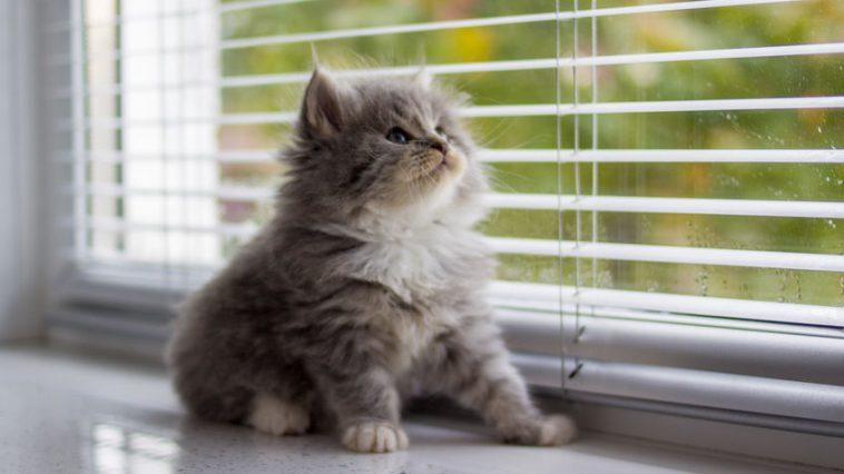 Koliko dugo mačka može biti sama