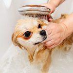 Pas se ponaša ludo poslije kupanja