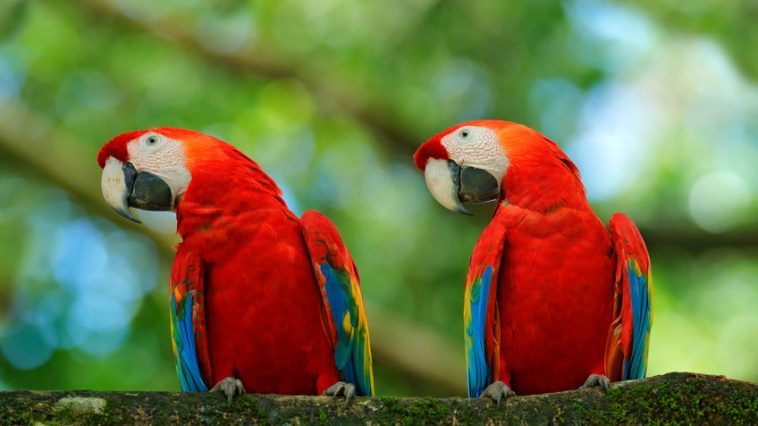 Spol kod ptica
