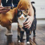 ljudska hrana za mačke