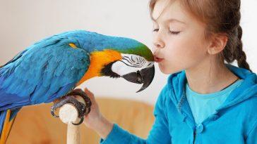 kako pripitomiti papagaja