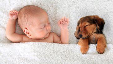 psi i bebe
