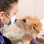 Psi mogu nanjušiti COVID