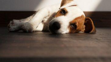 proljev kod štenaca
